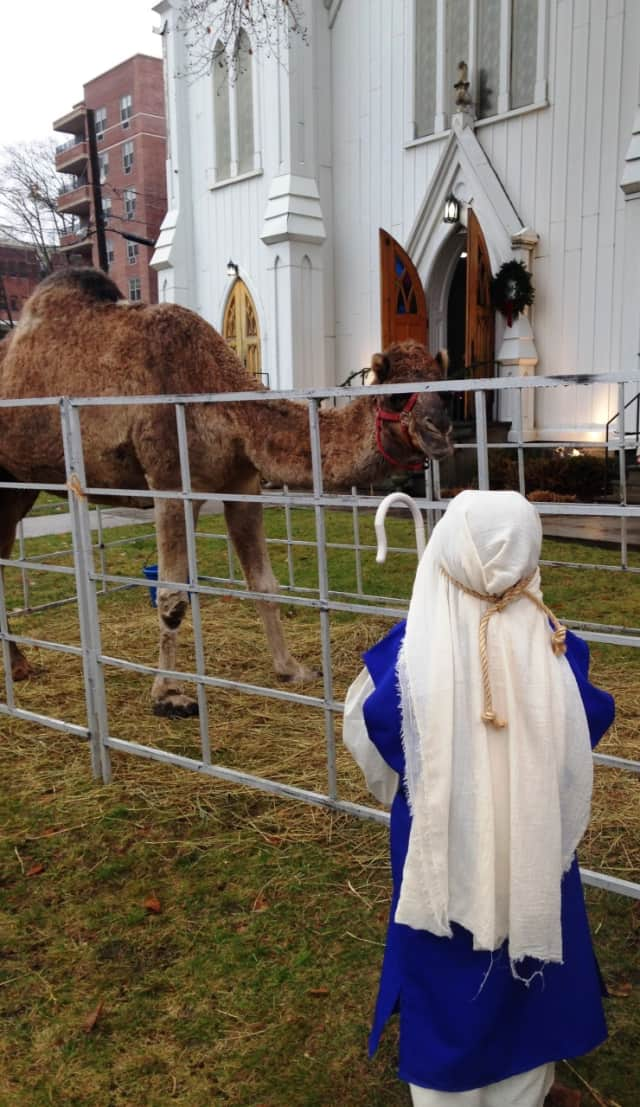 A live Nativity scene, featuring a number of animals, will be one of the many attractions at the 7th Annual Greenwich Holiday Stroll Weekend on Saturday, Dec. 5 and Sunday, Dec. 6.