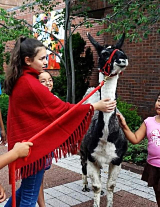Kids can get a well-rounded llama experience at the Field Library next week.