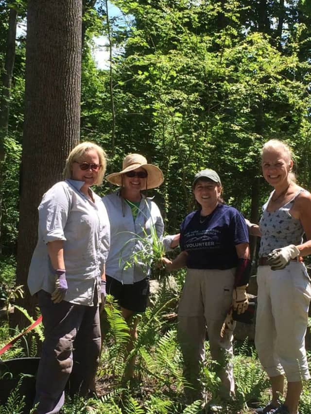 Volunteers from the Lewisboro Garden Club weeded the new native plant garden at Leon Levy Preserve in July.