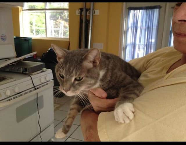 This cat was found on Grove Street in Tarrytown.