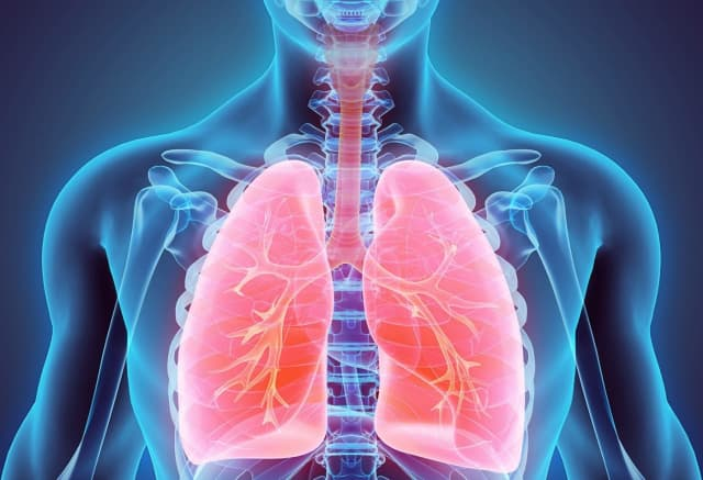 Improve your health with the new lung cancer screening program at Phelps.