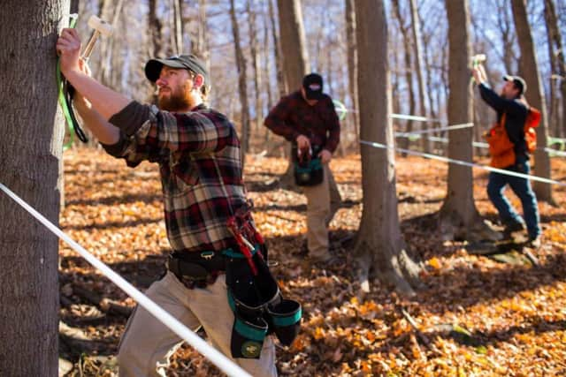 Works prepare the trees at Madava Farms for the upcoming maple season.