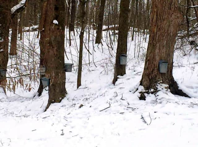 A maple sugaring event takes place at Ward Pound Ridge Reservation on Saturday, Feb. 27.
