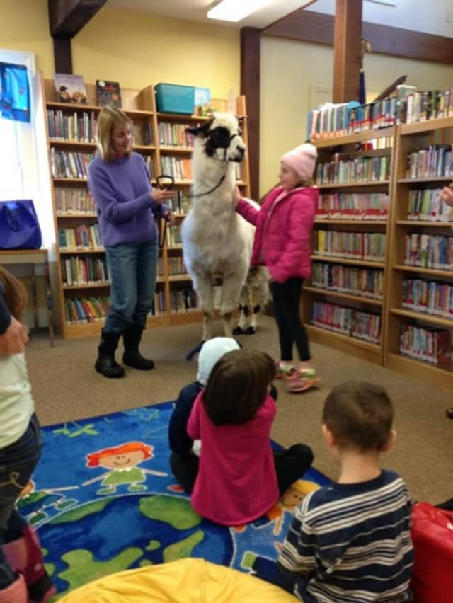 """Come meet a real llama Saturday, Jan. 30, at the NorthEast-Millerton Library's """"Hooked on Llamas"""" event. The children's book, """"Is Your Mama A Llama?"""" will be read."""