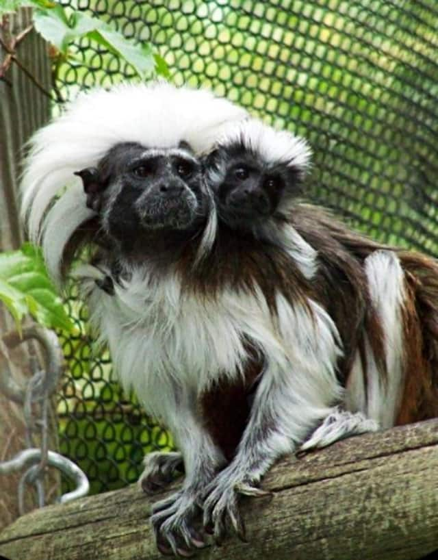 The Bergen County Zoo will celebrate Endangered Species Day this Saturday.