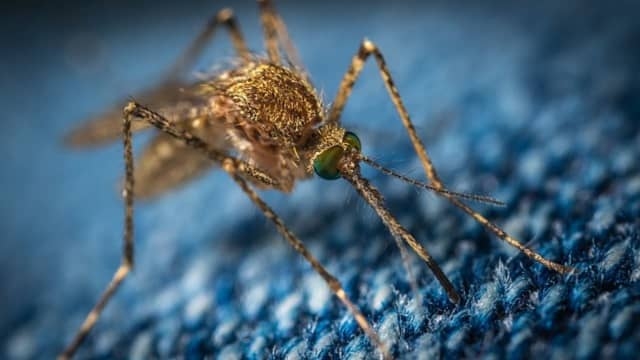 A New Jersey man died of West Nile Virus last month, health officials confirmed.