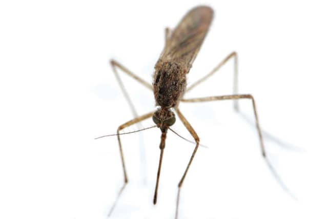The first pool, or group, of mosquitoes to test positive this year in Rockland County for West Nile Virus has been confirmed.