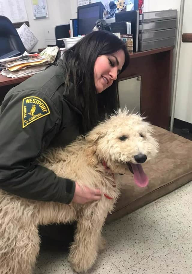 Mozart the dog was reunited with his family after going missing on Dec. 26