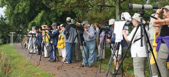 Bring binoculars to nature walk at Losen Slote Creek Park in Little Ferry.