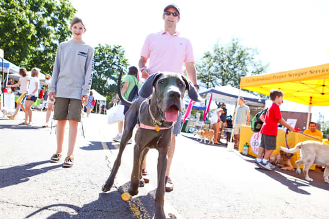 Man's Best Friend will be honored and celebrated Sunday afternoon in New Canaan with the annual Dog Day Festival.
