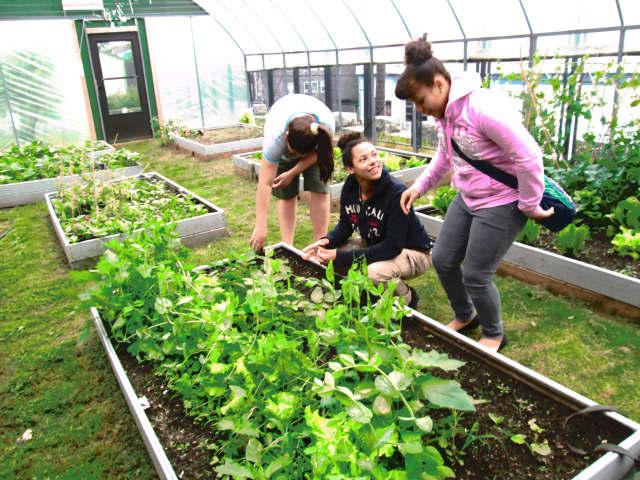 Peekskill Middle School students Briana Moran, Essence Boyd-Roberts and Olivia McIntosh work the land in the garden on the middle school's campus.