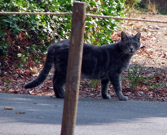 Wyckoff officials issued a warning after a rabid cat was found on West Main Street.
