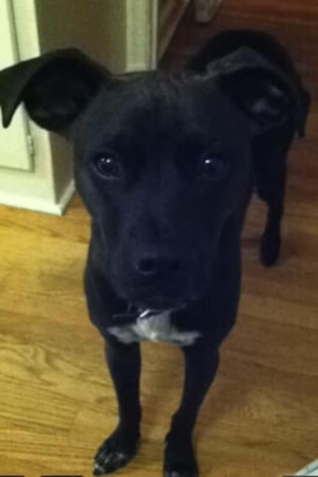 Have you seen Duke? He went missing from Rye Playland at around 6:15 a.m. Sunday.
