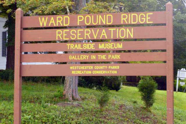 "Ward Pound Ridge Reservation is the spot for the monthly ""Starway to Heaven"" observations."