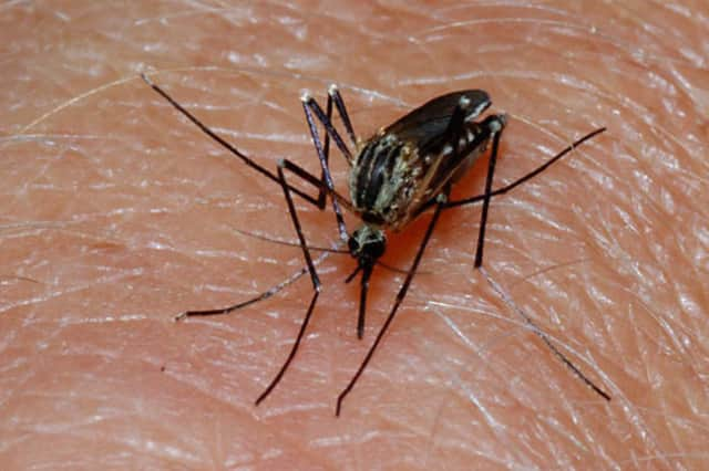 The first batch of mosquitos in Westchester to test positive for West Nile Virus was found in Rye Brook.