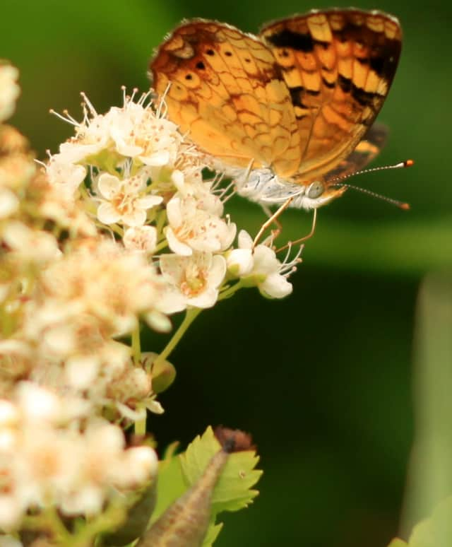 Butterfly expert Victor DeMasi will lead a walk through the Norwalk river study site on Saturday.