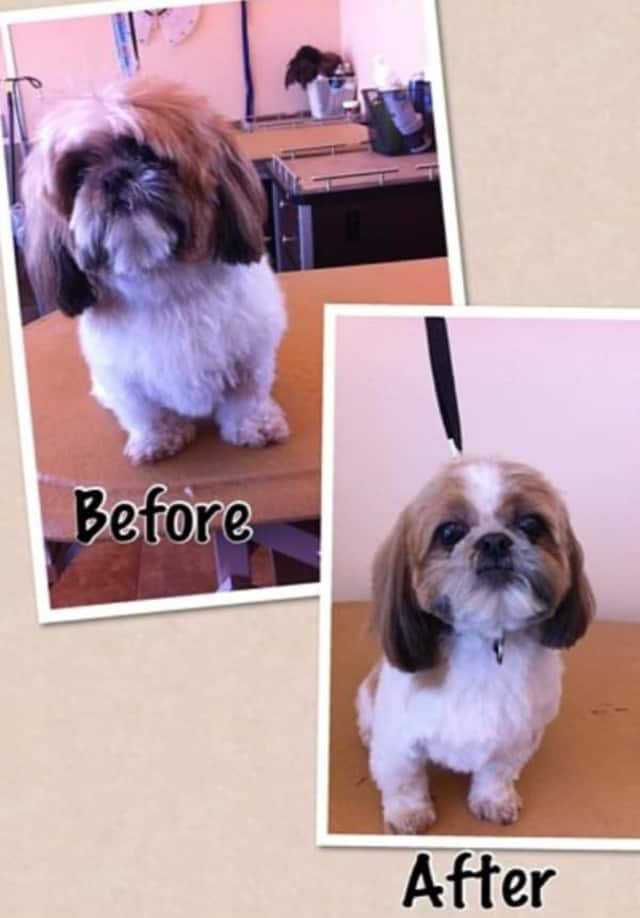 An example of the new Tuckahoe dog groomer's work.