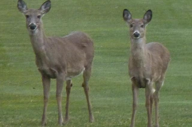 The shotgun and rifle season opens Monday in Connecticut for turkey and deer.