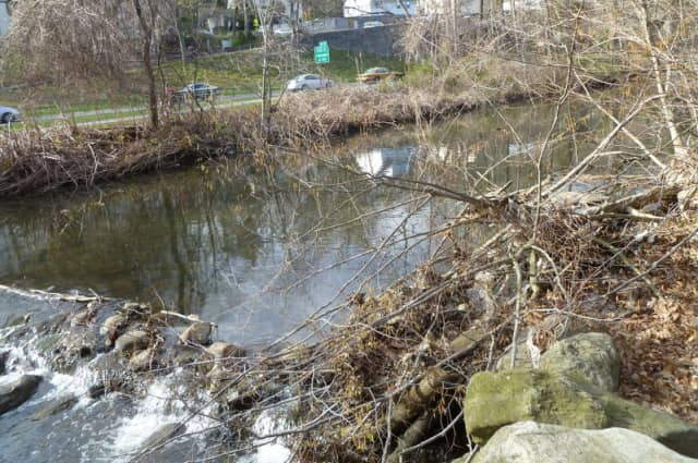 Restoration to the Bronx River Parkway Reservation will improve the wetland's ability to cleanse and absorb stormwater runoff to enhance the attractiveness of the site, Westchester officials said