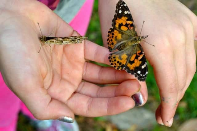 Monarch butterflies will be released Sunday in Wilton as a symbol of peace for the victims of domestic violence.