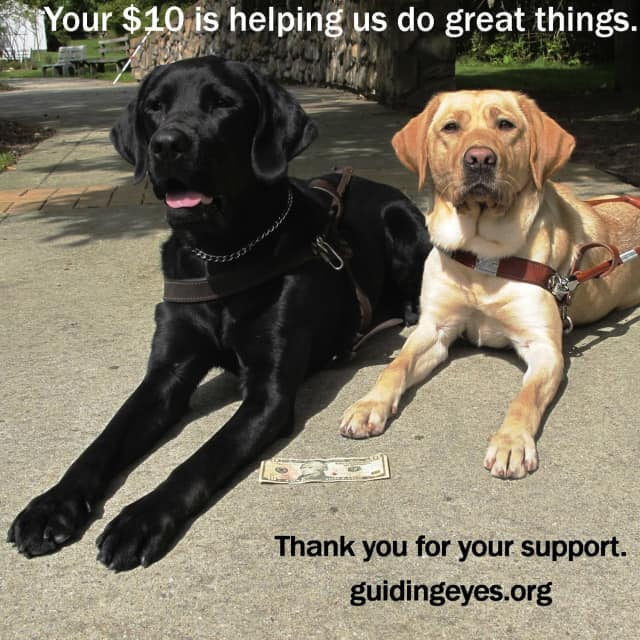 """Guiding Eyes for the Blind is launching a """"Text to Give"""" campaign in honor of Blindness Awareness month in October."""