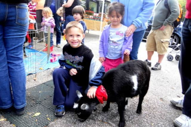 The petting zoo at the Briarcliff Manor Harvest Festival is one of the festival's most popular events.