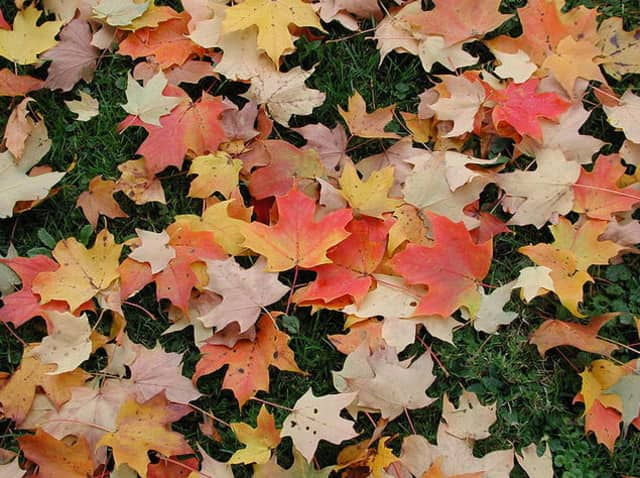 """The Rye Nature Center is hosting a number of activities throughout October, including the """"Great Leaf Hunt."""""""