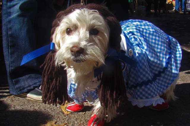 """Dress up your pet and celebrate """"Howl-o-Ween"""" at Scarsdale's Central Animal Hospital"""