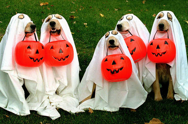 The Ossining Uptown Committee will bring the first ever Halloween Pet Parade to Croton Avenue.