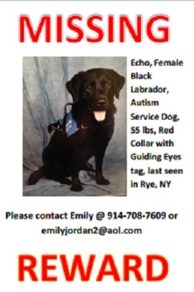 Echo, a female black lab who acts as a service dog for a 5-year-old autistic child, went missing last week in Rye.