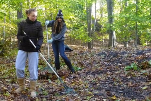 Leaf collection begins in Greenwich on Nov. 25.
