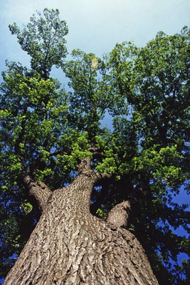 Trees have many benefits.