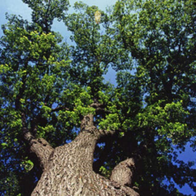 An inventory of Wilton Center's 109 trees was completed recently.