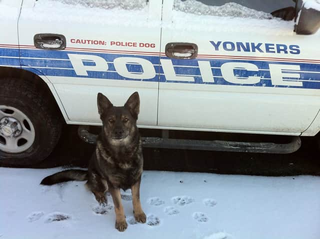 """A longtime partner and friend, K-9 Officer, """"Doc,"""" completed his last tour of duty yesterday."""
