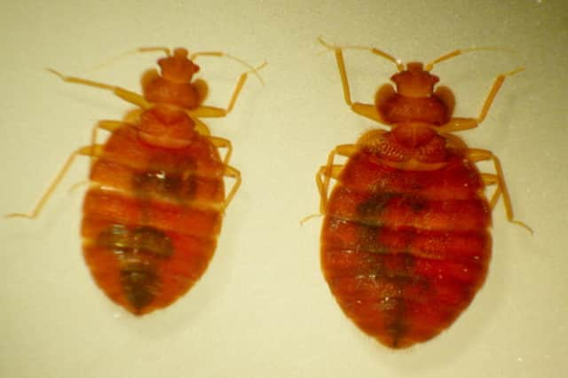 A Yonkers school is dealing with a bed bug sighting.