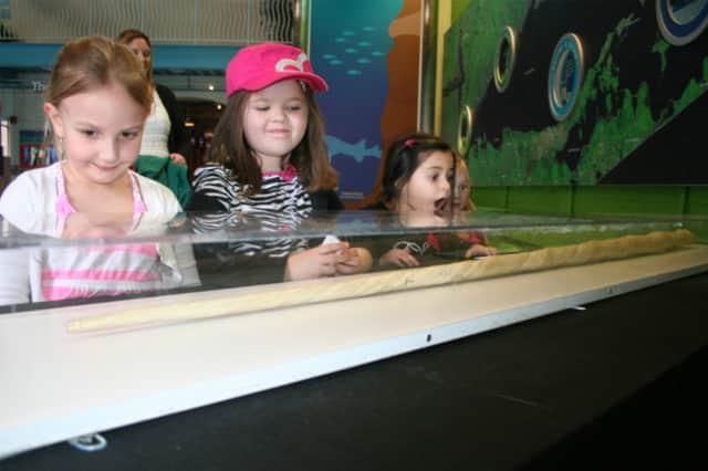 Viewing the tusk are, from left: Nina Alexakis, 4 of Dumont, N.J.; Jaelin Murphy, 5, of Bergenfield, N.J.; Natalia Ramirez, 5, of Dumont, N.J.; and Brooke Mallardi, 4, of Bergenfield, N.J.