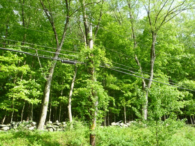 New Canaan officials have halted tree removal and trimming work by Eversource until they can get a clearer picture of the work planned.