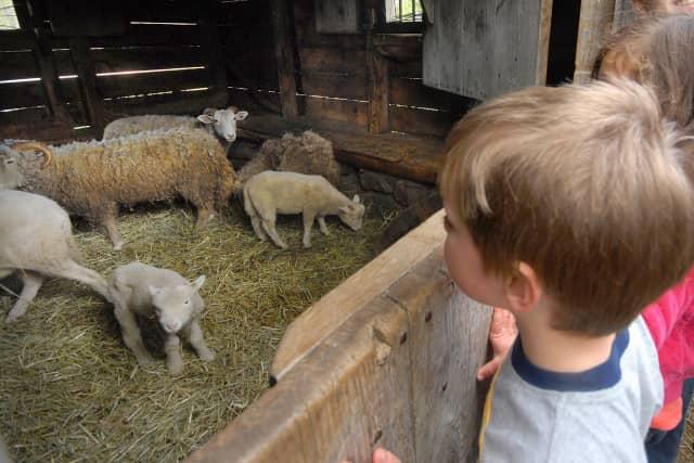 Philipsburg Manor's Sheep-to-Shawl festival is set to kick off the season on April 12.