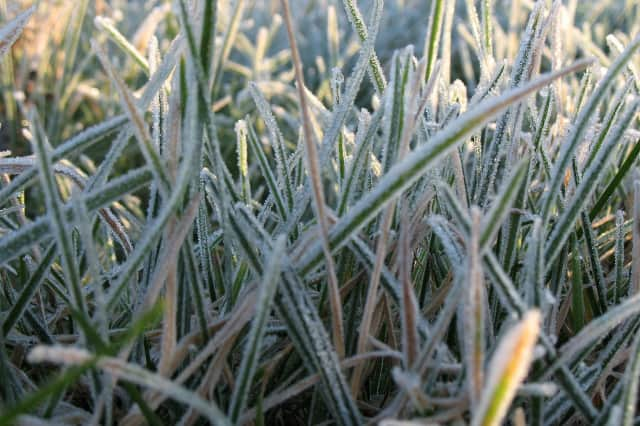 Frost reportedly could affect plants and crops in Fairfield County overnight.