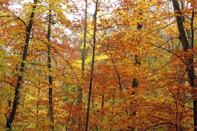 The state Department of Energy and Environmental Protection has designated New Canaan as a Tree City USA.