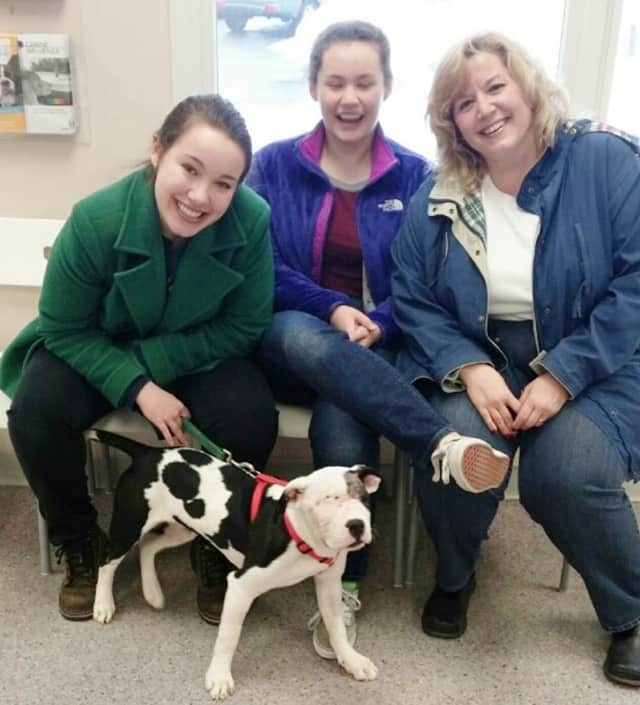 Champ, an abused pitbull puppy, was rescued by the SPCA and later adopted by the McClure family in Yorktown.