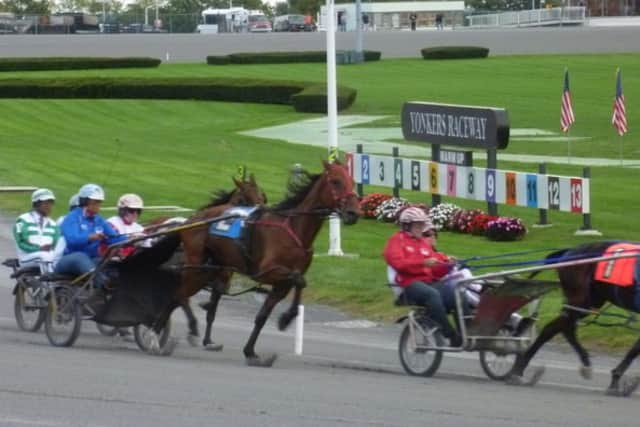 Liberty Cruise (not pictured) a Yonkers Raceway racehorse died on Monday.
