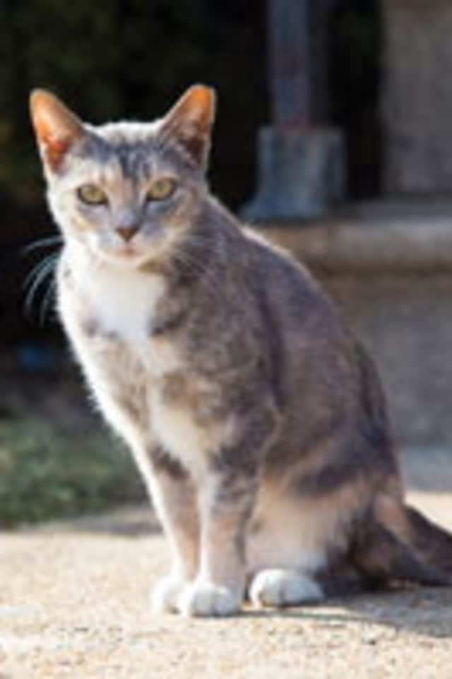 County Executive Rob Astorino recently announced additional funding to help control the feral cat population in Westchester.