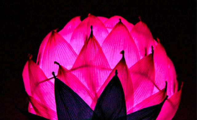 Members of the Korean Spirit and Culture Promotion Project will help participants make Korean lotus flower lanterns at Hammond Museum.