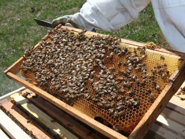 An introduction to bee keeping will be held in Ridgewood.
