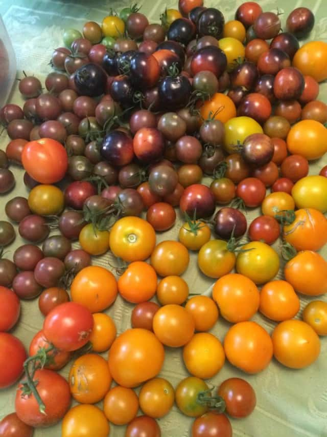Tomatoes are for sale at Langdon FarmsNY in Irvington on Tuesday, Aug. 12.