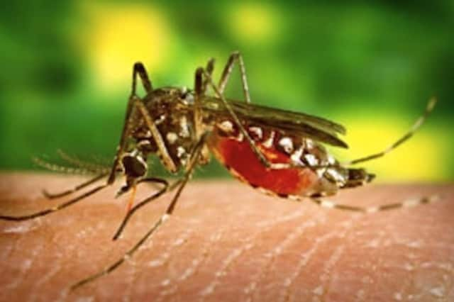 A Larchmont woman has been diagnosed with West Nile Virus, the first human case this year in Westchester County.