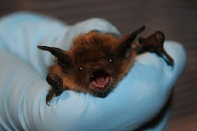 A bat captured in a New Canaan home has tested positive for rabies.