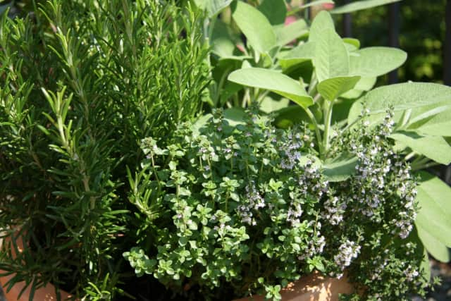 Herbs and plants, along with many other items, will be available for sale at Herb Society of America event.