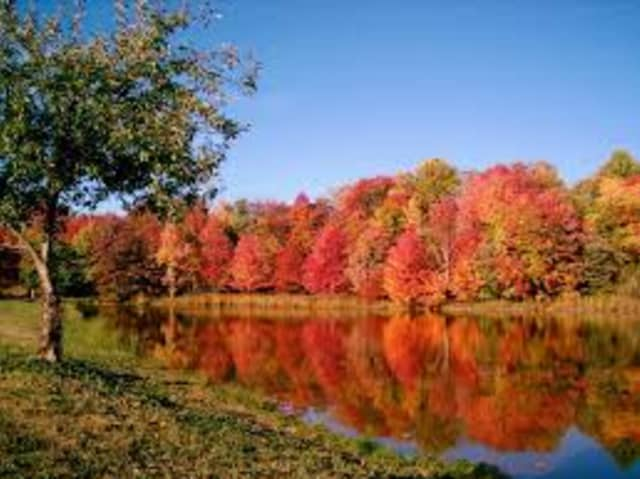 Experience fall foliage at Read Life Sanctuary in Rye.